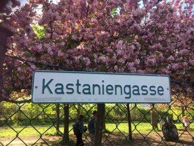 Kastaniengasse Schwedenhäuschen Mietz